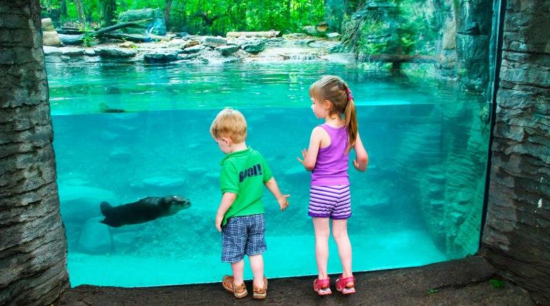 Zoológico - Dia das crianças 2016