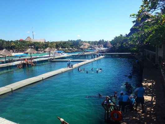 Show dos golfinhos no Xcaret