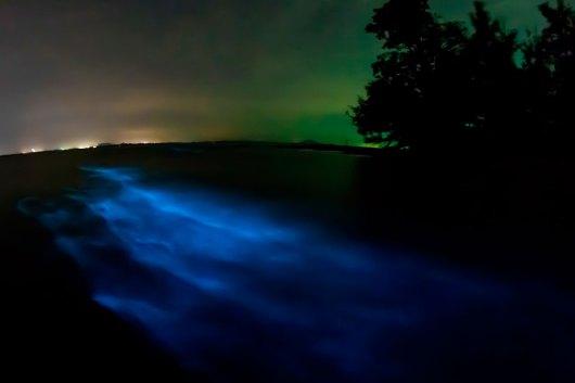 Bioluminescência em Indian River