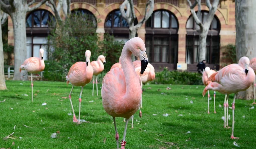 Зоопарк в Барселоне