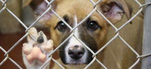 Pesquisa aponta que 61% dos donos de animais de estimação veem seus pets como um membro da família