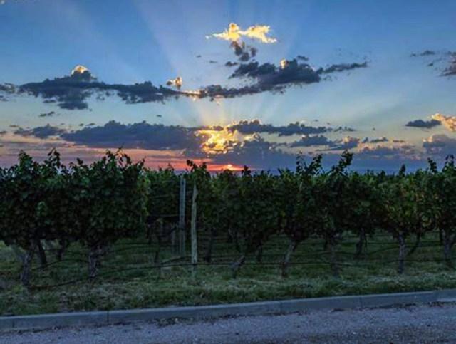 Gosta de vinhos? Confira essas dicas de Enoturismo na América do Sul