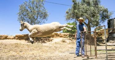 Pequenos Ruminantes - veterinária Ana Simões - Vida Rural  (7)
