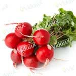 Rabanete Redondo Vermelho Precoce  –  002674