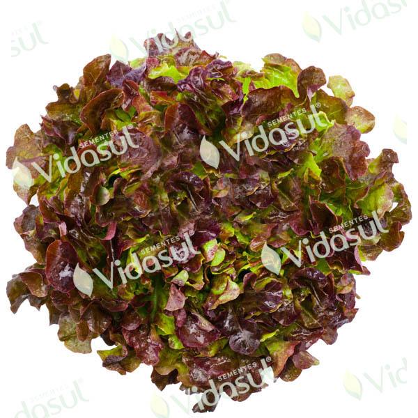 Alface Mimosa Roxa Salad Bowl