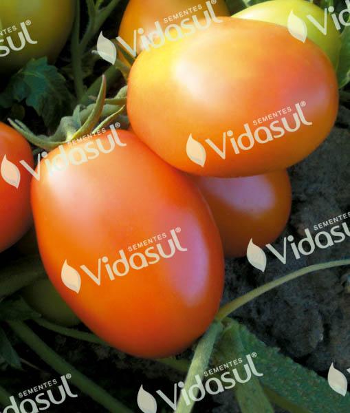 Tomate IPA 6