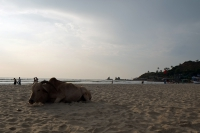 Videonauts Indien Business Trip 2014 Goa Arambol beach
