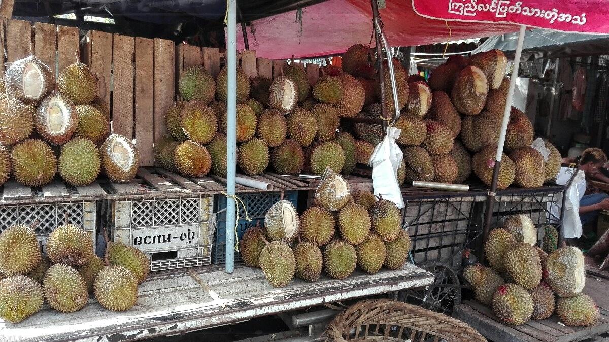 Videonauts Sabbatical Burma Durian