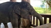 Videonauts Sabbatical Laos Luang Prabang Elephant Village III