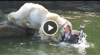 white bear attack a woman