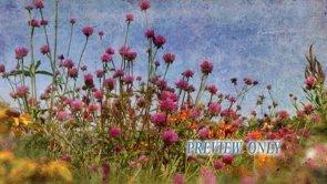 Fall Garden Flowers Worship Background