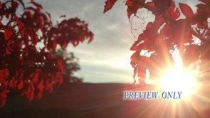 Red Leaves: Fall HD Worship Loop