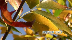 Fall: Propresenter Moving Background