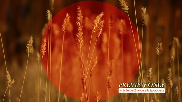 Tall Grass Fall Church Background