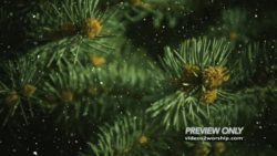 Evergreen Branches And Falling Snow