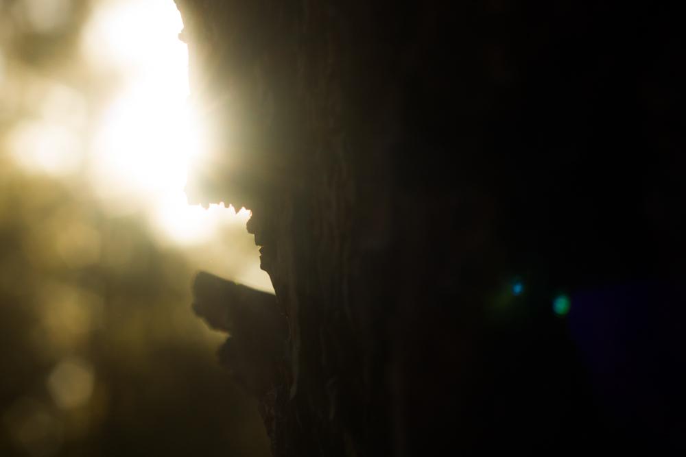 Natural Light Inspiration-1