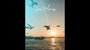 Read more about the article Good Morning Whatsapp Status Video Download