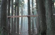 A Xylophone Of The Forest
