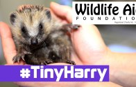 Tiny Hedgehog Goes Camping