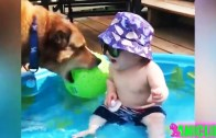 Funny Babies Laughing At Their Pets