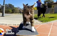 Meet The Most Talented Cats In The World