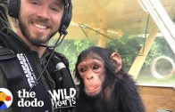 A Pilot Rescues A Cute Baby Chimp