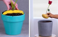 12 Expert Indoor Gardening Tips You Must Know About