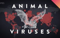 This Is Why Viruses Transfer From Animals To Humans