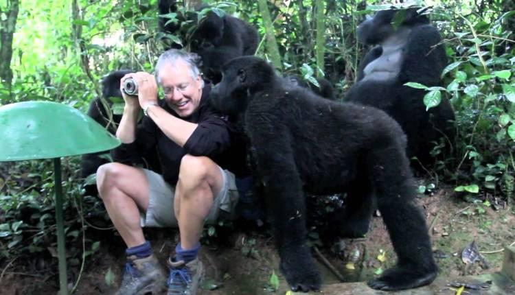 A Gorilla Confronts A Man