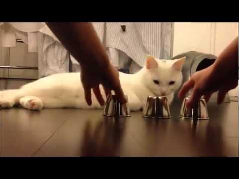 Amazing Cat With Intelligent Focus Ability