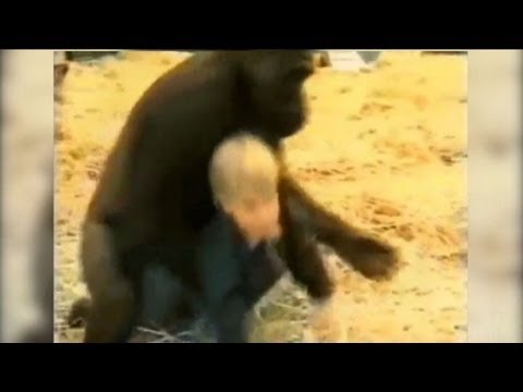 Baby With Gorilla In Cage
