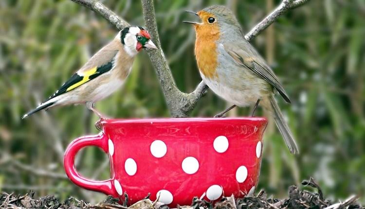 Beautiful Birds Singing And Chirping