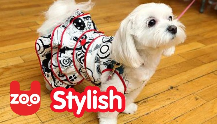 Chinese Dog Fashion