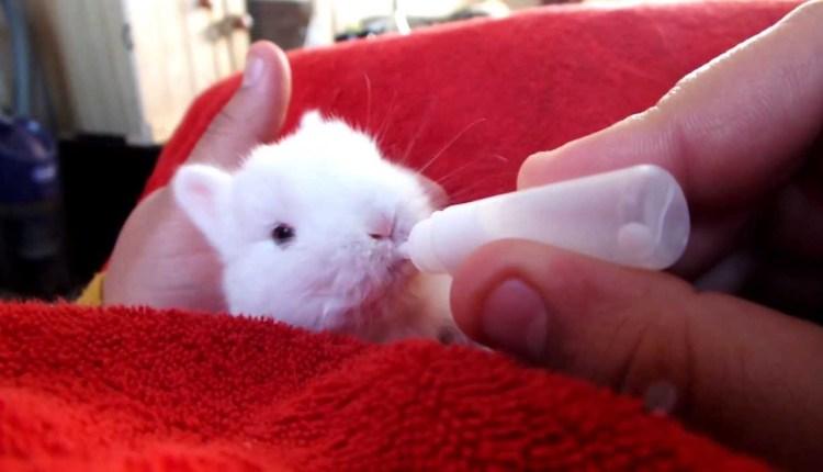 Cutest Baby Bunny Ever Seen