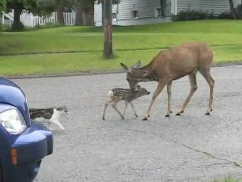 Deer Are So Cute