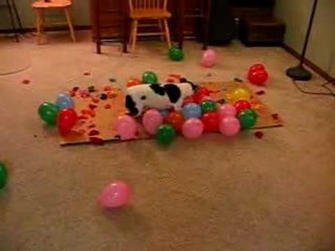 Dog vs. Balloons, This Time It's Personal