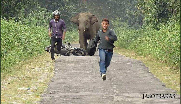 Elephent Chasing Bike Rider
