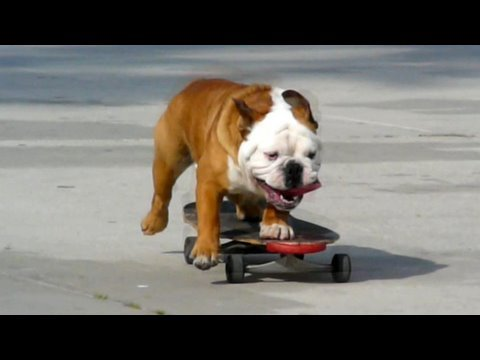 Funniest Animal Video Clips