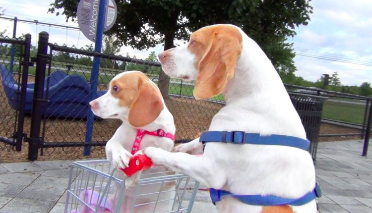 Funny Dog Takes Sister On A Trip