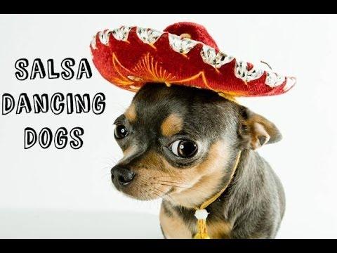Funny Salsa Dancing Dogs