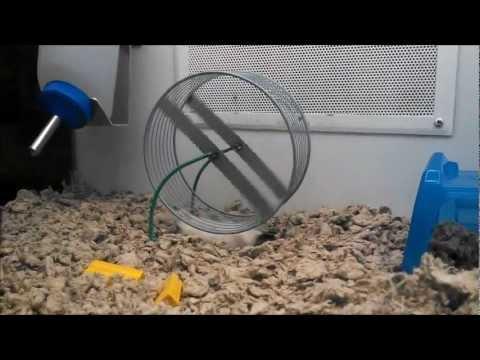 Funny Upside Down Running Hamster