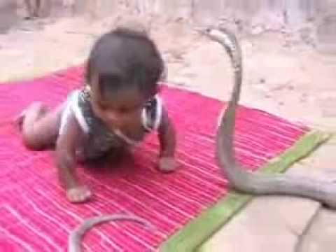 Indian Baby Playing with Cobra