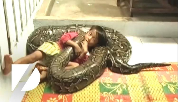 Kid Rides Giant Python