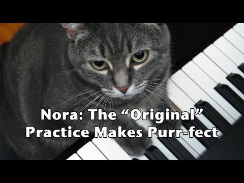 """""""NORA The Piano Cat"""" – Practice Makes Purr-fect"""