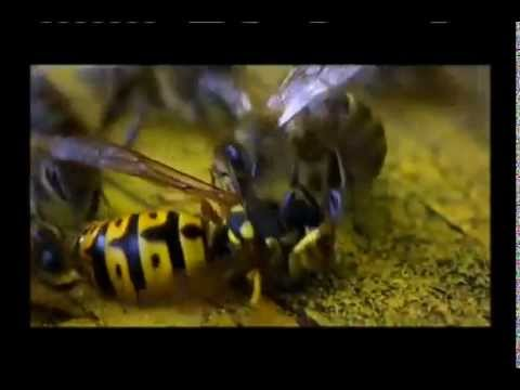 PBS Nova Tales From the Hive