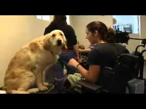 Service Dogs For People