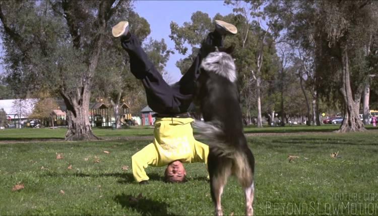The Epic Parkour Dog
