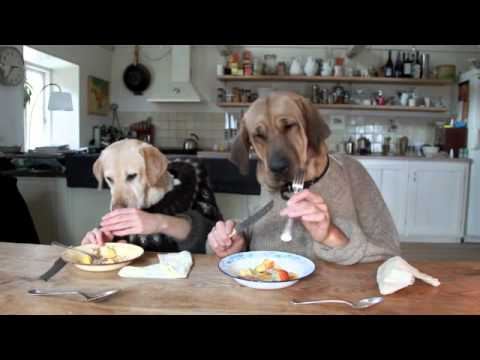 Two Amazing Dogs Dining
