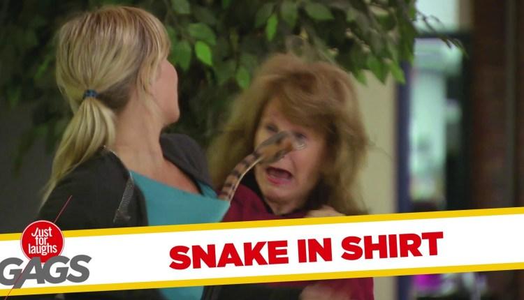 Cobra in Shirt Scary Prank