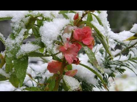 Flowers And Snow Make A Perfect Combo